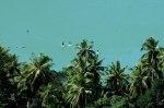 SupDreams Mayotte
